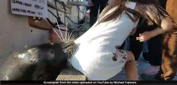 sea-lion-dragged-a-girl-into-water